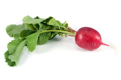 Red radish isolated Royalty Free Stock Photos