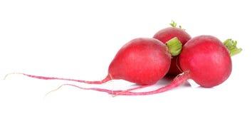Red radish isolated on the white background Royalty Free Stock Image