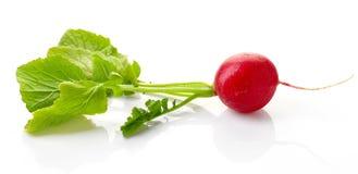 Red radish isolated on white background Stock Photos