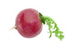 Red radish macro Royalty Free Stock Photos