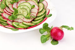 Red radish next to the plate with a spring salad Stock Photography