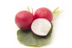 Red radish. Red organic radish on white background stock image