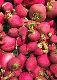 Red radish. Pack of some organic red radish royalty free stock photography