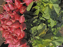 Red Radish, Raphanus sativus Stock Photos