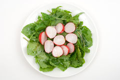 Red radish salad Stock Photography