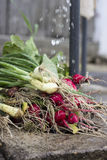 Red radish and spring onion Stock Image
