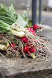 Red radish and spring onion being washed. Freshly picked, another angle Royalty Free Stock Image