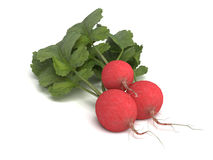 Red Radish Vegetables with Green Leaves on White Royalty Free Stock Photography