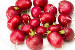 Red radish. The white background of red radish Royalty Free Stock Photography