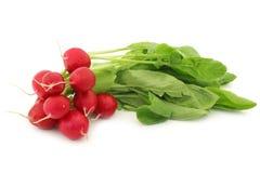 Red radish Stock Photography