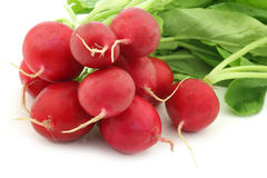 Red radish Royalty Free Stock Images