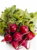 Red radish Stock Image