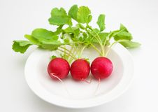 Red radish on white plate. Royalty Free Stock Image