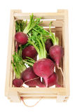 Red Radishes Stock Photo