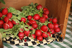 Red Radishes. Fresh red radishes in a box Royalty Free Stock Photos