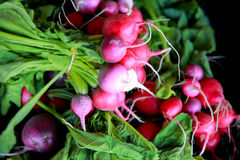 Red radishes Royalty Free Stock Photo