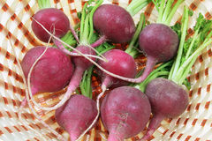 Red Radishes in Basket. Close Up of Red Radishes in Basket Stock Photography