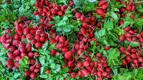 Red radishes in bulk. Can be used as background or wallpaper and for other possibility or to modify to your taste stock photography