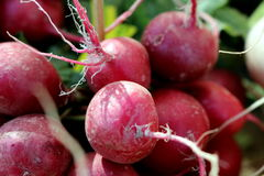 Red Radishes. A bunch of red radishes are a crisp addition to healthy eating Stock Images