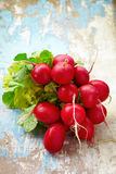Red radishes bundle b Royalty Free Stock Photography