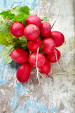 Red radishes bundle Royalty Free Stock Photo