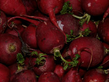 Red radishes close-up. Fresh red radish close up Royalty Free Stock Images