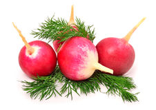 Red radishes with dill. Isolated on white Royalty Free Stock Photos
