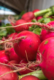 Red Radishes On Display. Closeup of bunches of red radishes with green leaves on sale at a market Royalty Free Stock Images
