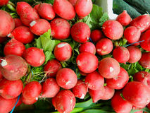 Red radishes Stock Photography