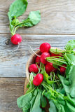Red radishes with green leaves in a bowl. Stock Photo