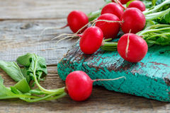 Red radishes with green leaves close-up. Stock Photography