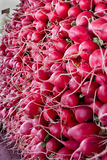 Red Radishes at Market. Red Radishes Stacked in a Pile at the Market Royalty Free Stock Photo