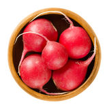 Red radishes in wooden bowl over white. Red radishes in wooden bowl. European radishes, Raphanus sativus, fresh edible root vegetable, eaten raw, as salad or as Stock Image