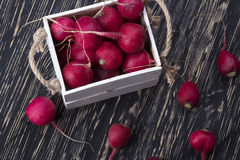 Red radishes in a wooden box. Stock Image
