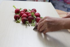 Red radishes on wooden cutting board, and  table. Red radishes on wooden cutting board, with hand, knife Stock Photo