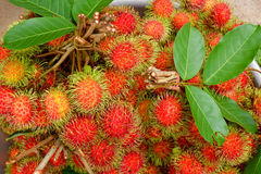 Red rambutan a bunch. Bunch of rambutans for  background Royalty Free Stock Image