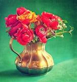 Red ranunculus flowers Royalty Free Stock Photos