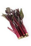 Red rapeseed stalk Royalty Free Stock Photos