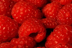 Red Raspberries Stock Image