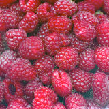 Red raspberries Royalty Free Stock Images
