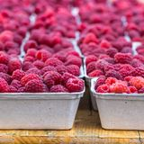Red raspberries in boxes at local farm market Royalty Free Stock Photography