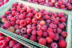 Red raspberries in cardboard boxes for sale. Closeup of ripe raspberries in a box. Narrow focus Royalty Free Stock Photography