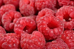 Red raspberries close up Royalty Free Stock Photos