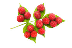 Red raspberries fruits with leaves Royalty Free Stock Photos
