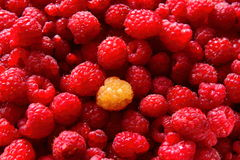 Red raspberries. Juicy raspberries are next to each other Royalty Free Stock Images