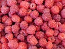 Red raspberries Stock Photos