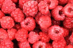 Red raspberries texture. As nice fruit background Royalty Free Stock Photography