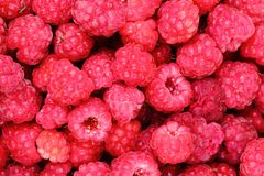 Red raspberries texture. As nice natural food background Stock Images