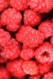 Red raspberries texture. As nice natural food background Royalty Free Stock Photo
