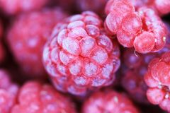 Red raspberries texture. As very nice natural food background Stock Image